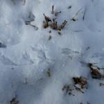Vogelspur im Schnee, Trittsiegel