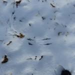 Vogelspur im Schnee, Landeplatz