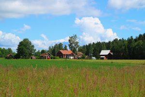 schwedische Sommerwiese
